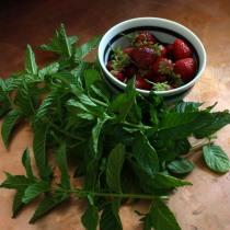 Mint & Strawberries